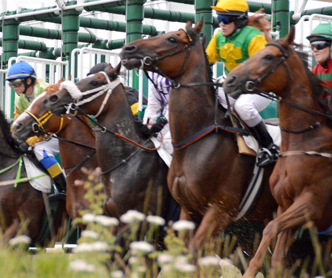 Kvinnlig jockey kan skriva historia